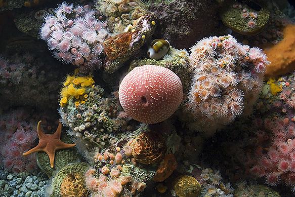 fondo_marino_acuario_Monterey