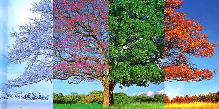 Las 4 estaciones, un libro de fotografía repleto de consejos para fotografiar cada día del año
