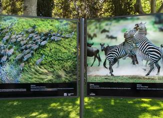 Salvajes--exposicion-fotografía de naturaleza en-el-Retiro
