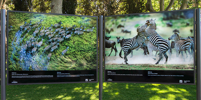 Animales salvajes en el Retiro, en una muestra de fotografía de naturaleza de Steve Bloom
