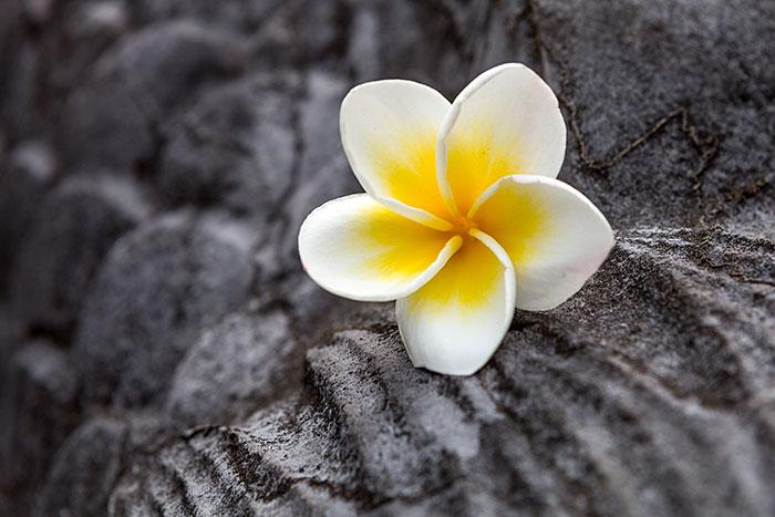 Omnifoto--Vietnam-flor-en-templo
