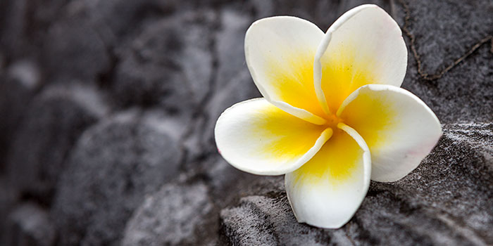Fotoinspiración para turistas: flores, un sujeto omnipresente y bonito