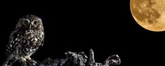Exodos-2015-Mario-Cea fragmento