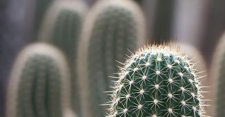 Omnifoto-cactus-fi