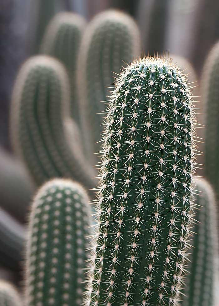 Omnifoto-cactus