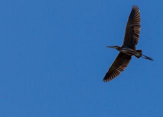 concurso-de-fotografia-de-aves-2