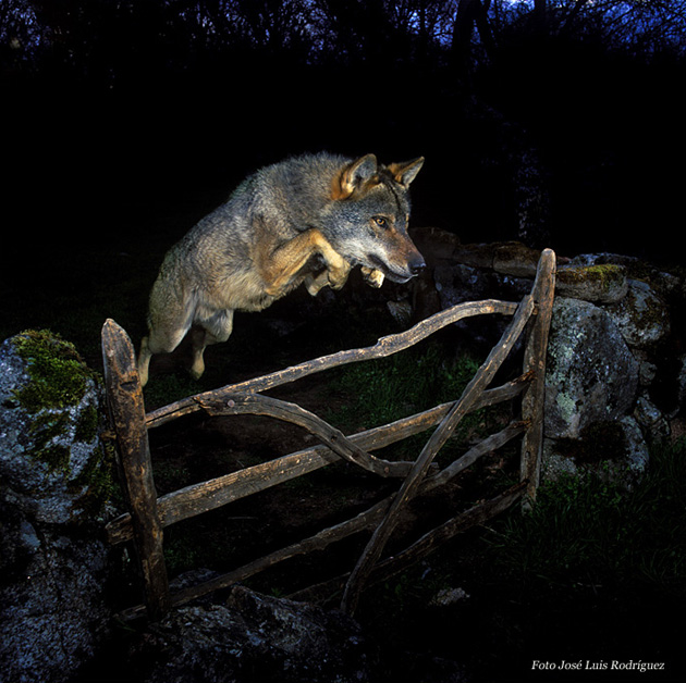Retiran el premio Wild Photographer a José Luis Rodríguez