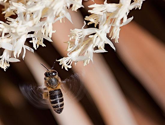 Fotos de verano: abejas en el jardín