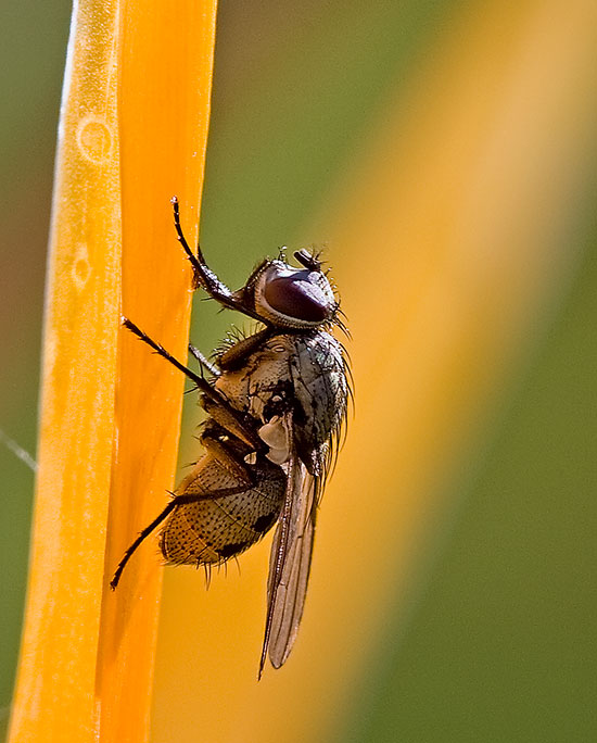Fotos de Verano: moscas en el jardín
