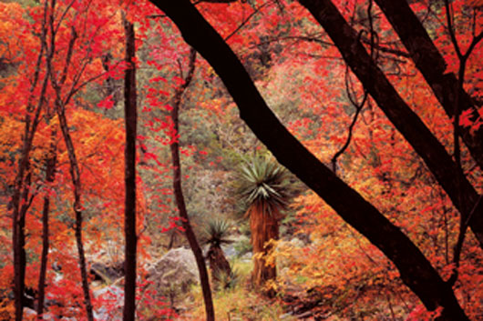 La imagen de los bosques, exposición en El Retiro