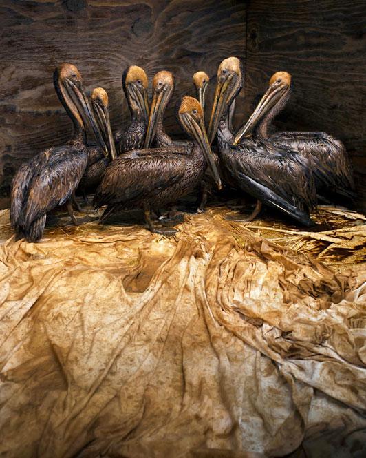 Un español gana le Veolia Wildlife Photographer of the Year
