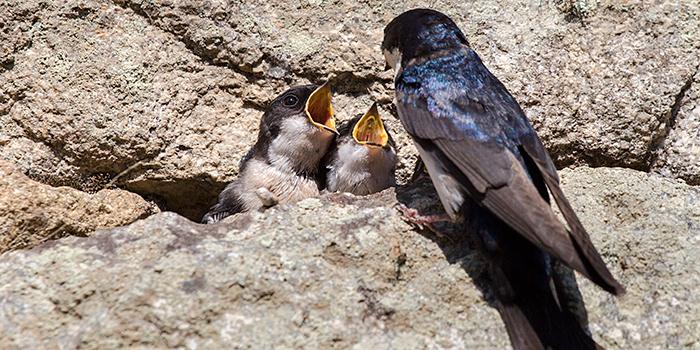 MADbird Fair, una feria de observación de aves en el corazón de Madrid