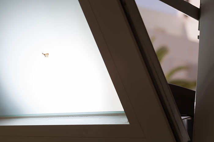 Omnifoto-mariposa-esquema