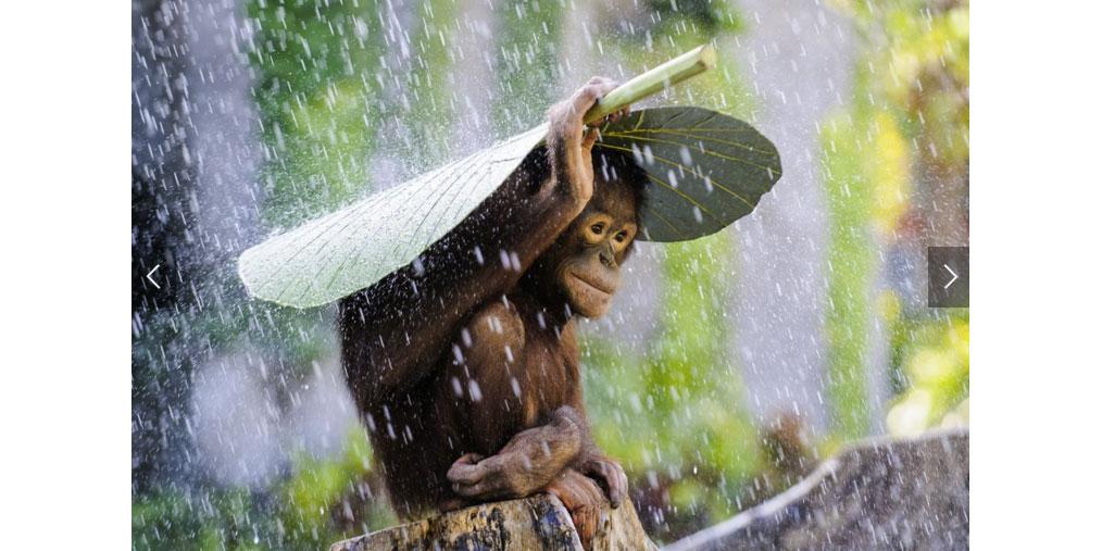 Un regalo de Reyes para la vista, fotografías ganadoras del concurso National Geographic 2015