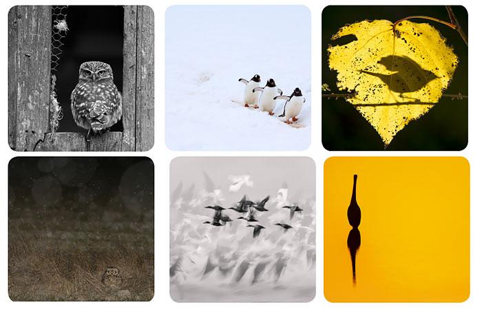 concurso-fotografia-de-aves